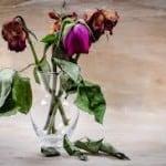 visne-blomster-150x150